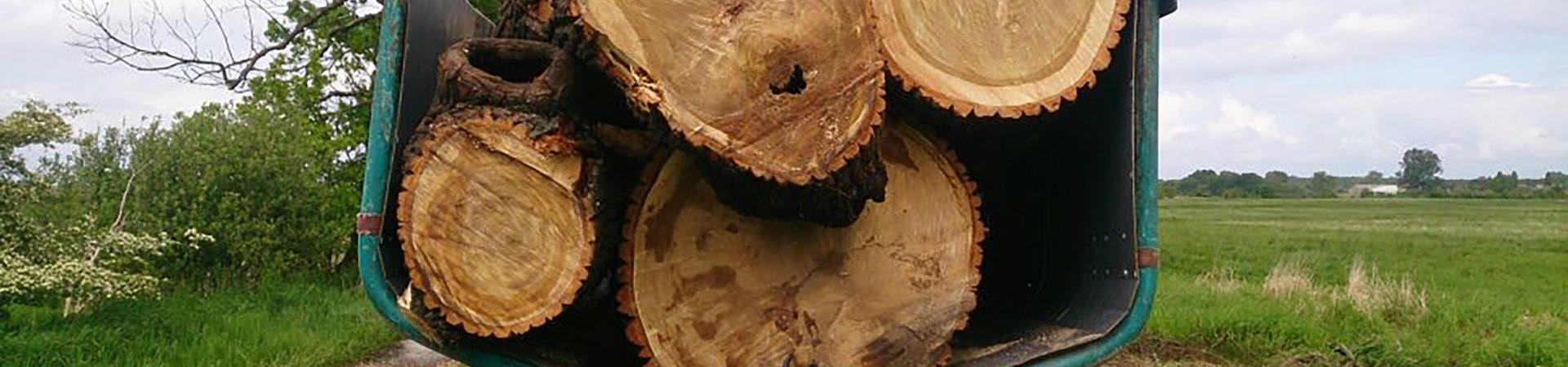 Holzhackschnitzel: umweltfreundlich und nachhaltig