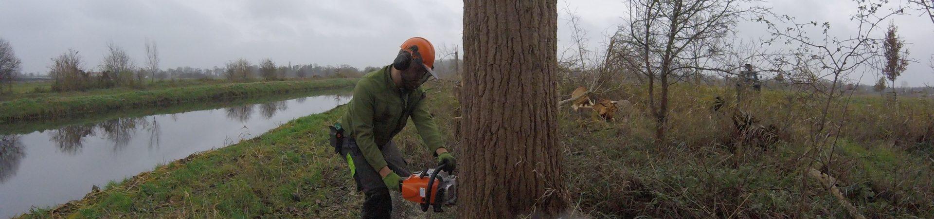 Holzhackschnitzel können für vieles dienen